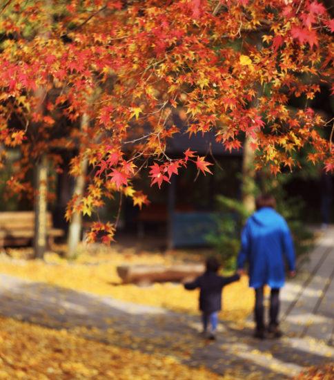 秋の白川水源