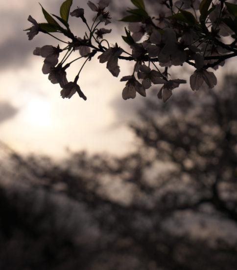 桜トライアスロン